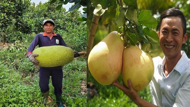 Giá mít Thái hôm nay 4/5: Nông dân miền Tây bỏ mít Thái trồng bưởi Tam Hồng bán giá cao, giá mít Thái lại giảm - Ảnh 1.