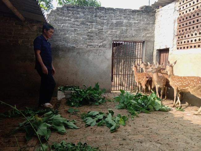 Tiếp sức nông dân Cố đô nuôi hươu lấy nhung - Ảnh 1.