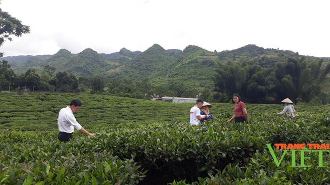 Lai Châu: Nông dân phường Quyết Thắng thi đua sản xuất kinh doanh giỏi - Ảnh 1.