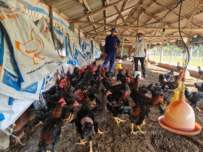 Quảng Nam: Khi nông dân áp dụng công nghệ hiện đại vào nông nghiệp - Ảnh 4.