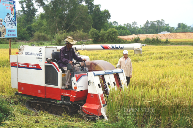 Quảng Nam: Khi nông dân áp dụng công nghệ hiện đại vào nông nghiệp - Ảnh 3.