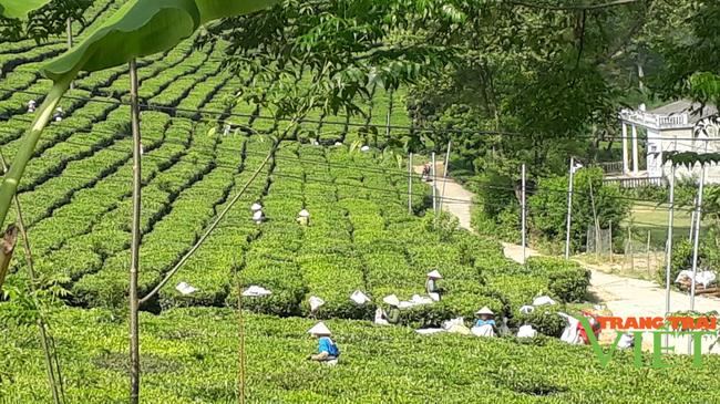 Hội Nông dân Lai Châu: Nâng cao hiệu quả các hoạt động tư vấn, hỗ trợ, dạy nghề cho nông dân - Ảnh 2.