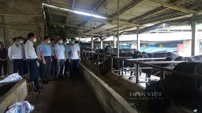 Thái Nguyên: HTX nuôi bò 3B vừa bán thịt vừa bán giống mỗi năm doanh thu hàng trăm tỷ đồng - Ảnh 3.