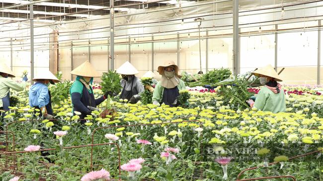 """Chuyển đổi số trong nông nghiệp ở Lâm Đồng (bài 1): Nông dân, doanh nghiệp đều tham gia """"cuộc chơi"""" công nghệ - Ảnh 5."""