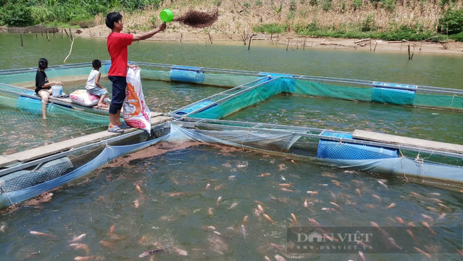 Quảng Nam: Nhiều thanh niên khởi nghiệp bằng nuôi bò, thả cá đã vươn lên làm giàu