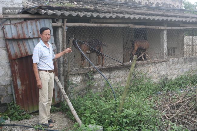 """Ninh Bình: U60 nuôi, trồng """"lung tung"""" bỏ túi gần 500 triệu/năm - Ảnh 3."""