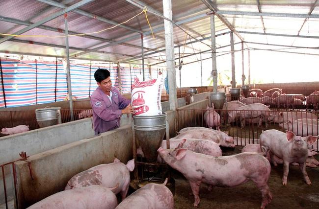 Chủ động về lợn nái, nhiều tỉnh tái đàn nhanh  - Ảnh 1.