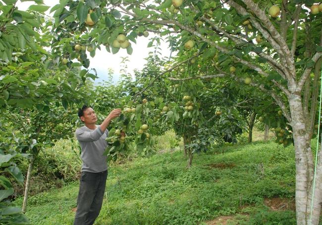 Giúp hộ nghèo có vốn nuôi trâu, trồng cây ăn quả  - Ảnh 1.