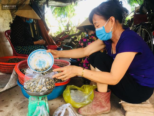 Ninh Bình: Thêm thu nhập từ nghề khêu ruột con ốc hột  - Ảnh 2.