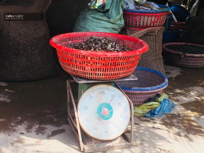 Ninh Bình: Thêm thu nhập từ nghề khêu ruột con ốc hột  - Ảnh 5.
