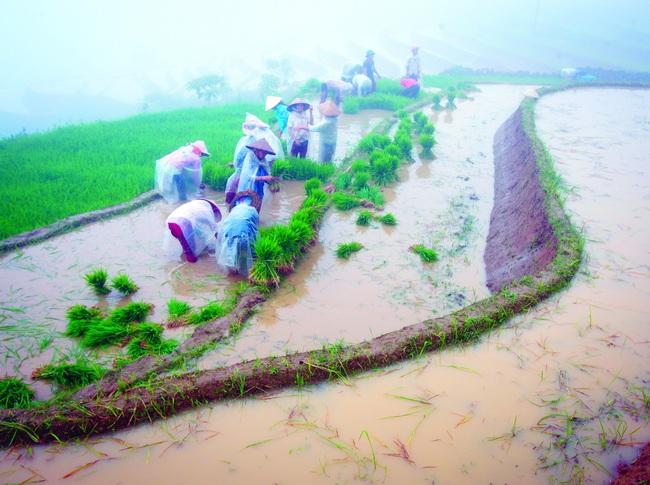 Mùa đổ nước ở thung lũng Thiên Sinh - Ảnh 6.