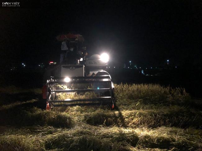"""CLIP – ẢNH: Nông dân Hà Tĩnh """"trốn nắng"""", gặt lúa xuyên đêm - Ảnh 8."""