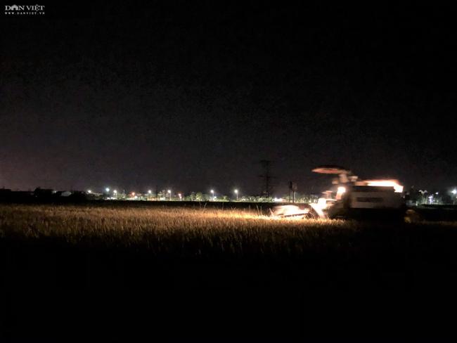 """CLIP – ẢNH: Nông dân Hà Tĩnh """"trốn nắng"""", gặt lúa xuyên đêm - Ảnh 3."""
