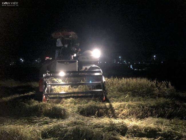 """CLIP – ẢNH: Nông dân Hà Tĩnh """"trốn nắng"""", gặt lúa xuyên đêm - Ảnh 2."""