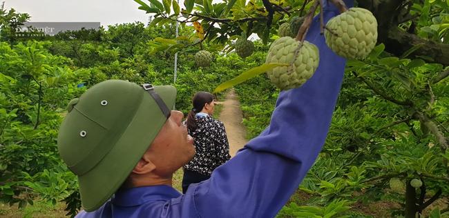 """Một ngày giải hơn 1 tỷ đồng, nông dân Quảng Ninh """"vỡ òa"""" khi nhận vốn vay  - Ảnh 3."""
