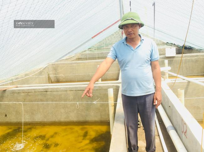 Lão nông Ninh Bình thu lời hơn 1 tỉ/năm, nhờ ươm con ngao, hàu giống - Ảnh 2.