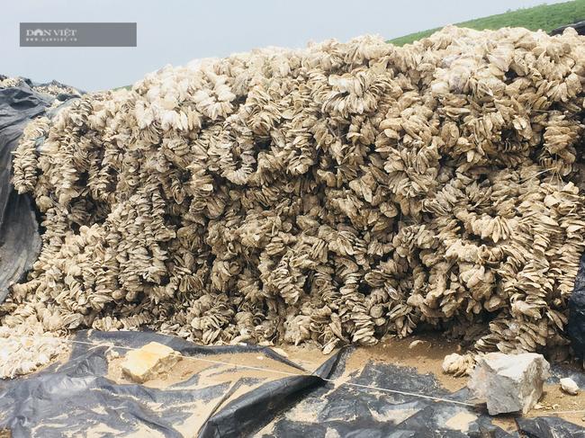 Lão nông Ninh Bình thu lời hơn 1 tỉ/năm, nhờ ươm con ngao, hàu giống - Ảnh 7.
