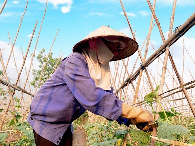 Lai Châu: Nông dân huyện Nậm Nhùn gắn sản xuất với phòng chống dịch Covid-19 - Ảnh 4.