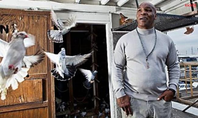 Mike Tyson đấm gục người đàn ông dọn rác để trả thù cho... 1 con chim bồ câu - Ảnh 2.