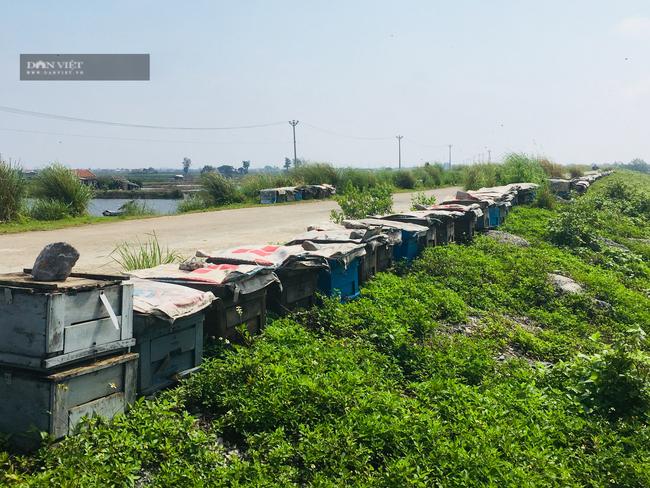 Ninh Bình: Đưa hàng trăm đàn ong xuống biển khai thác phấn hoa sú vẹt làm mật  - Ảnh 4.