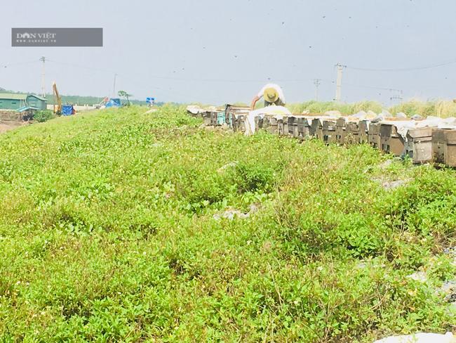Ninh Bình: Đưa hàng trăm đàn ong xuống biển khai thác phấn hoa sú vẹt làm mật  - Ảnh 6.