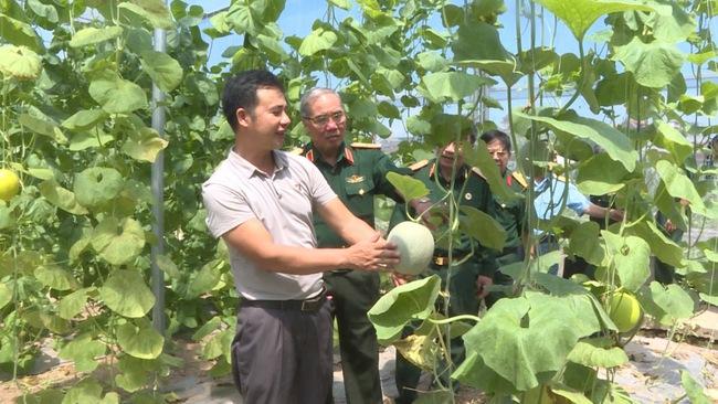 Ứng Hòa đẩy mạnh nông nghiệp công nghệ cao - Ảnh 1.