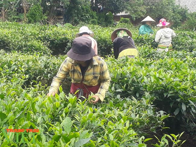 Lai Châu: Phát huy hiệu quả đồng vốn Quỹ hỗ trợ nông dân - Ảnh 2.