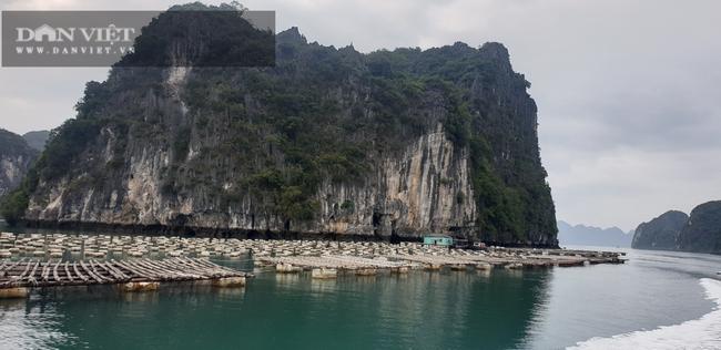 Quảng Ninh: Xóa sổ phao xốp trong nuôi trồng thủy sản từ năm 2022 - Ảnh 1.