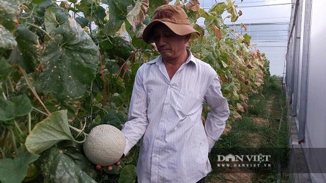 Quyết tâm chặt bỏ hàng trăm cây cam, chuyển hướng trồng dưa lưới, ông nông dân Hà Tĩnh trúng quả đậm