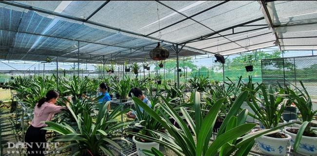 """Bảo tồn lan rừng quý hiếm, một phụ nữ ở Đà Nẵng """"rủng rỉnh"""" thu tiền tỷ mỗi năm - Ảnh 8."""