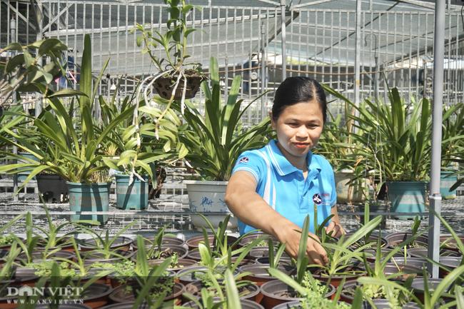 """Bảo tồn lan rừng quý hiếm, một phụ nữ ở Đà Nẵng """"rủng rỉnh"""" thu tiền tỷ mỗi năm - Ảnh 4."""