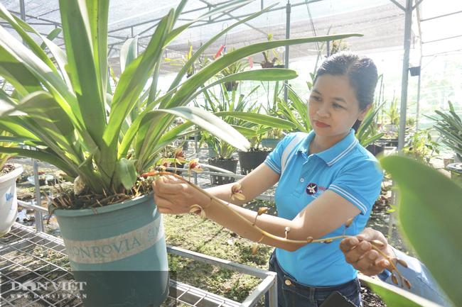"""Bảo tồn lan rừng quý hiếm, một phụ nữ ở Đà Nẵng """"rủng rỉnh"""" thu tiền tỷ mỗi năm - Ảnh 1."""