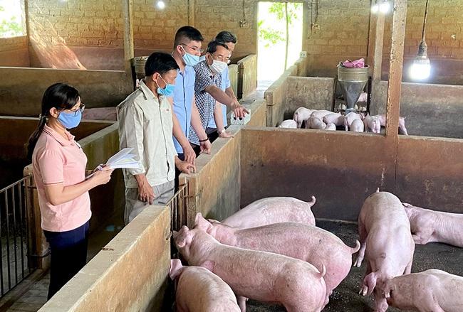 Ứng dụng công nghệ trong xử lý chất thải chăn nuôi lợn - Ảnh 1.