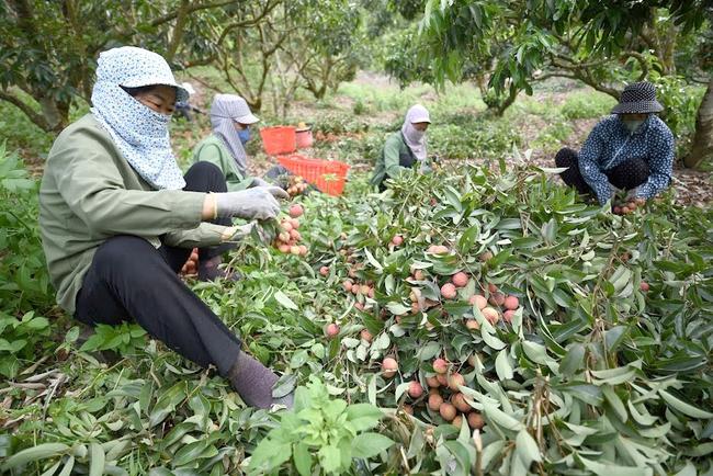 Hỗ trợ nông dân tìm đầu ra cho nông sản mùa dịch - Ảnh 1.