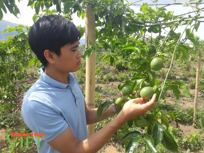 Lê Lợi mở hướng thoát nghèo từ cây ăn quả - Ảnh 1.