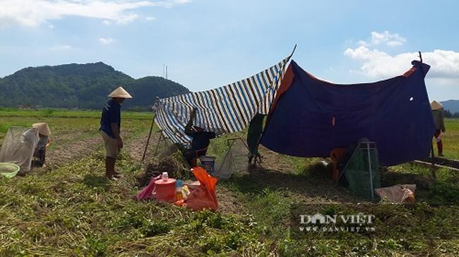 Hà Tĩnh: Nông dân phấn khởi vì lạc Xuân được mùa - Ảnh 7.