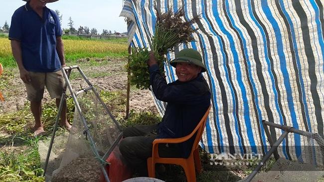 Hà Tĩnh: Nông dân phấn khởi vì lạc Xuân được mùa - Ảnh 10.