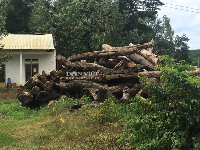 """Bình Phước: Dự án """"bảo vệ rừng"""" để … mất rừng, một số tổ chức bị kiểm điểm - Ảnh 1."""
