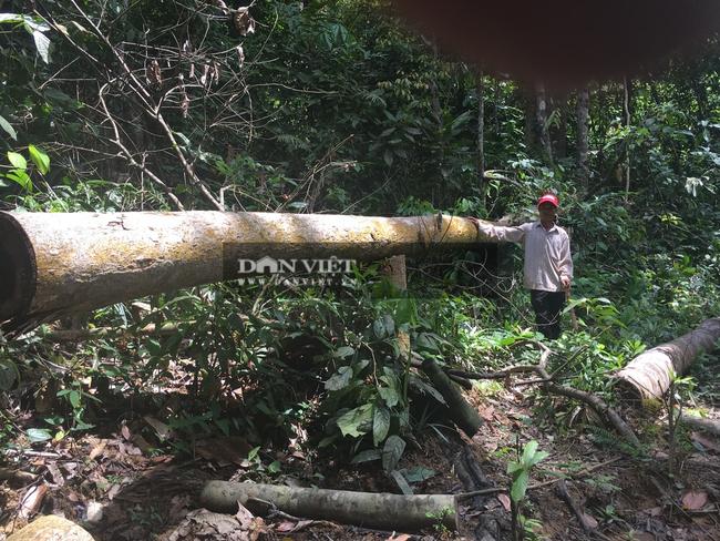 """Bình Phước: Dự án """"bảo vệ rừng"""" để … mất rừng, một số tổ chức bị kiểm điểm - Ảnh 5."""
