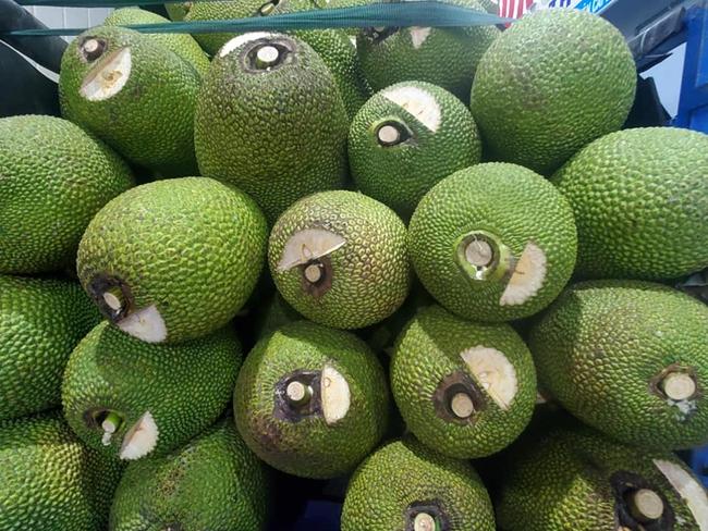 Giá mít Thái hôm nay 5/5: Lão nông miền Tây trồng mít không xơ đen, giá bán 40.000 đồng/kg - Ảnh 1.