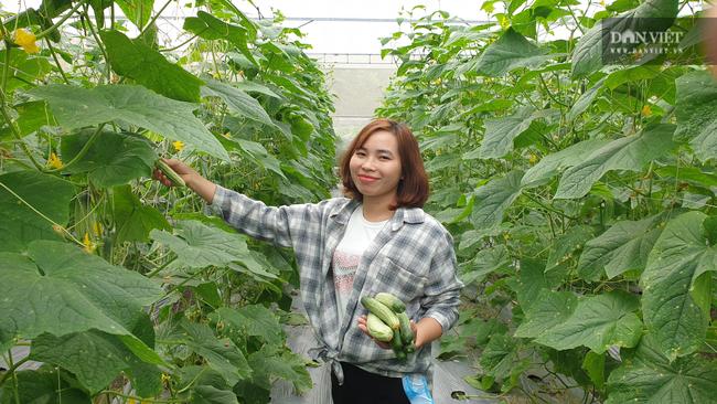 Ninh Bình: Vào tận chân núi trồng đủ thứ, cô thôn nữ miền sơn cước hái hàng chục triệu/tháng - Ảnh 1.