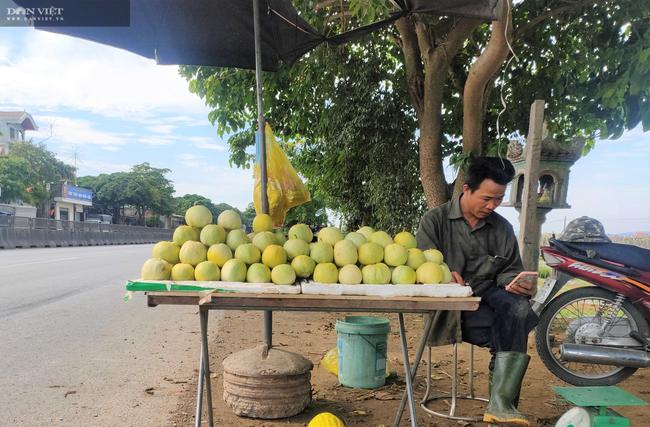 """CLIP: Nông dân (Nghệ An) """"méo mặt"""" dưa lê mất mùa, giá lại cao - Ảnh 9."""