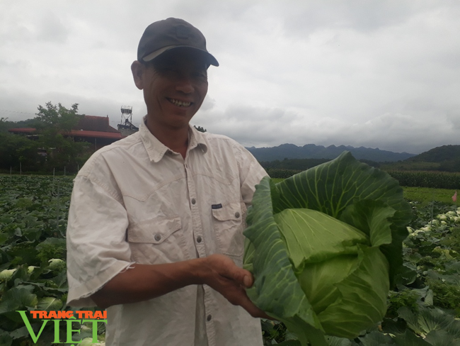 Sơn La: Bỏ ngô trồng rau an toàn, một nông dân thu cả tỷ đồng mỗi năm - Ảnh 1.