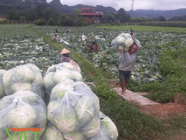 Sơn La: Bỏ ngô trồng rau an toàn, một nông dân thu cả tỷ đồng mỗi năm - Ảnh 2.