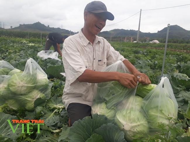 Sơn La: Bỏ ngô trồng rau an toàn, một nông dân thu cả tỷ đồng mỗi năm - Ảnh 3.
