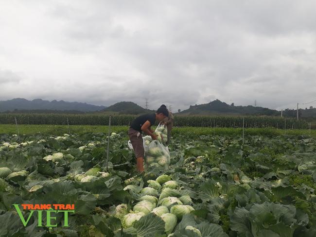 Sơn La: Bỏ ngô trồng rau an toàn, một nông dân thu cả tỷ đồng mỗi năm - Ảnh 4.