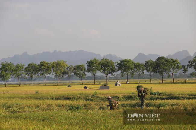 Người dân ngoại thành Hà Nội gặt lúa dưới thời tiết nắng nóng 40 độ C - Ảnh 1.