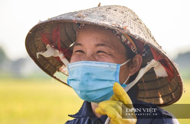 Người dân ngoại thành Hà Nội gặt lúa dưới thời tiết nắng nóng 40 độ C - Ảnh 7.