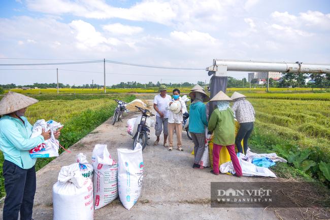 Người dân ngoại thành Hà Nội gặt lúa dưới thời tiết nắng nóng 40 độ C - Ảnh 8.