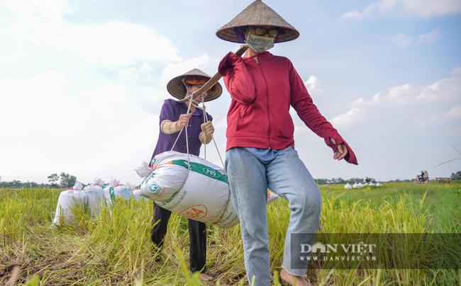 Người dân ngoại thành Hà Nội gặt lúa dưới thời tiết nắng nóng 40 độ C - Ảnh 9.